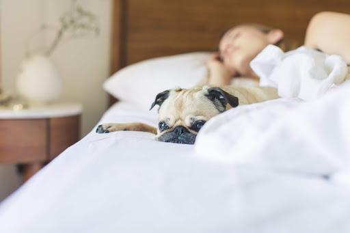 Strategies to Optimize Your Sleep Environment